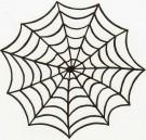 Spindelnat